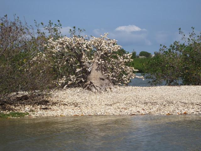IMG_3097 ▷ La Laguna de la Somone