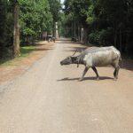 Información útil: Transporte Interurbano en Camboya