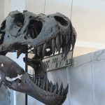 Erfoud, Tierra de Fósiles
