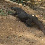 Información útil: Los animales de Sri Lanka. Precauciones.