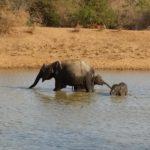 Ella – Tissa: Parque Nacional de Yala