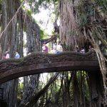 Ubud: La Leyenda del Bosque de los Monos