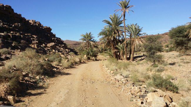 Detalles de una carretera que transcurre entre palmeras