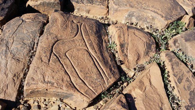 Gacela sobre piedra arenisca