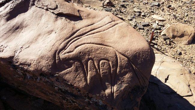 Gacela cincelada sobre la roca