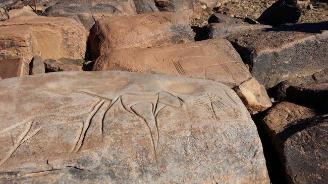 Animales prehistóricos del desierto