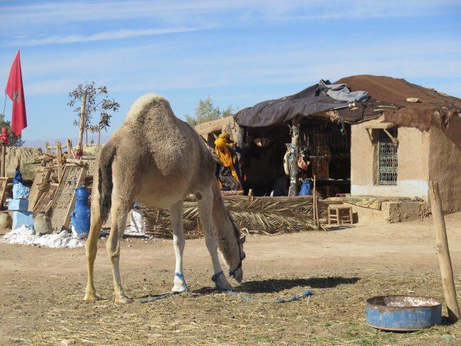 Visitas típicas Marruecos