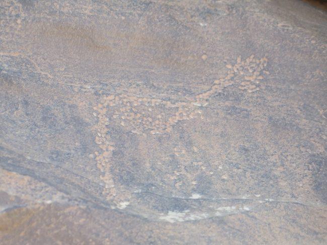 Selva en el desierto