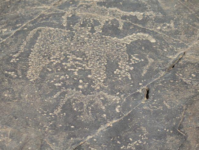 Gravado rupestre de bóvidos