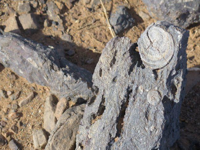 Fósiles Erg Chebbi