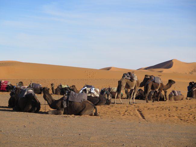Camellos en Merzouga