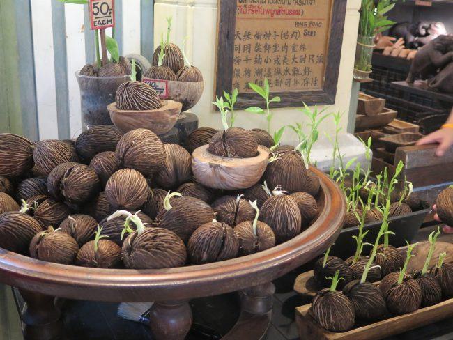 Plantas de Tailandia