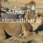 Videos: Sáhara Extraordinario