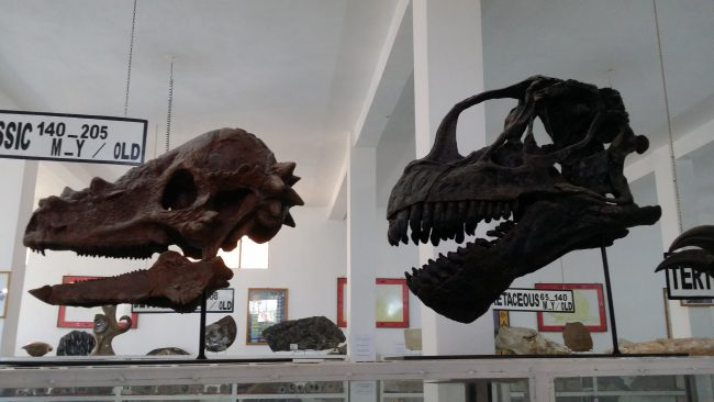 Cabezas de dinosaurios en el Museo de Fósiles de Erfoud