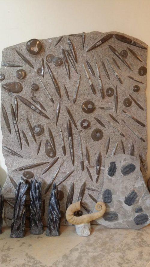 Placa repleta de fósiles en Erfoud
