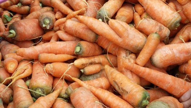 Estupendas zanahorias del tafilalt