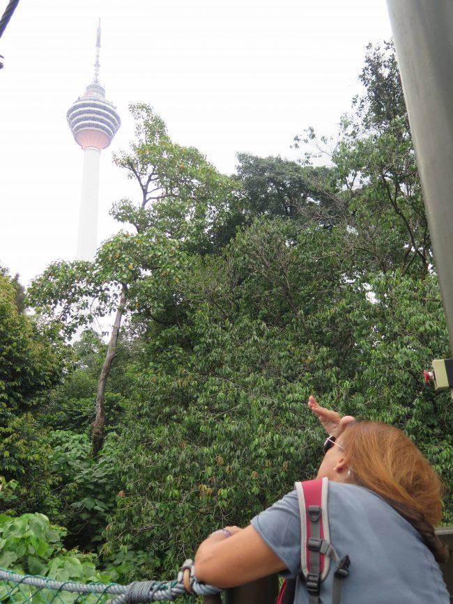 Bosque de Kuala Lumpur