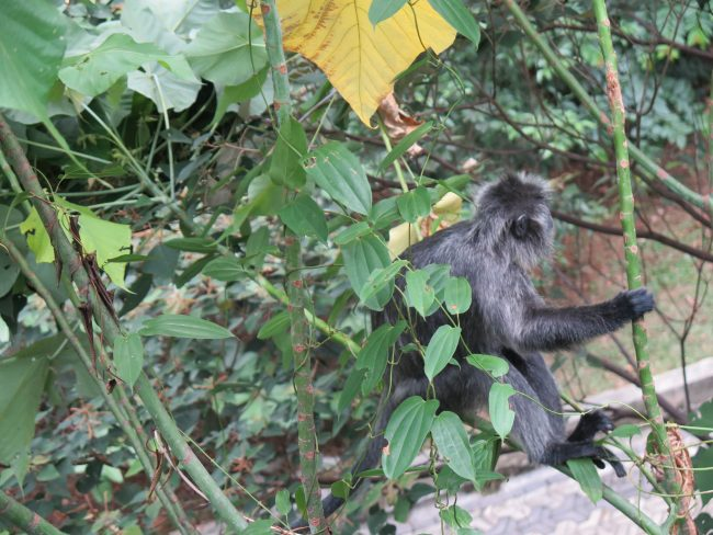 Animales en Kuala Lumpur