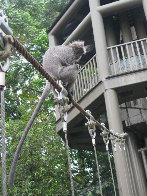 La fauna de Kuala Lumpur