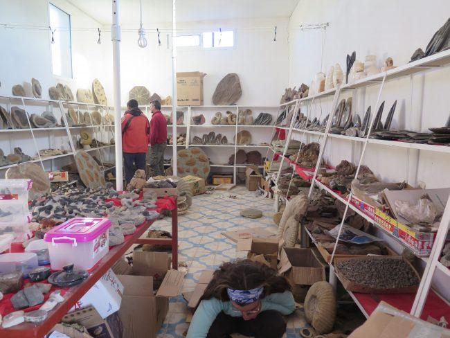 Cientos de fósiles en un almacén de Erfoud