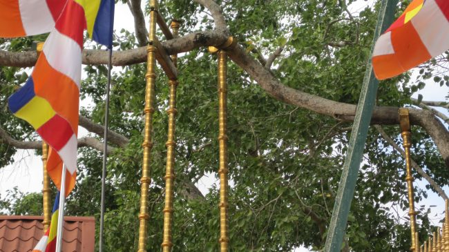 Árbol de Buda