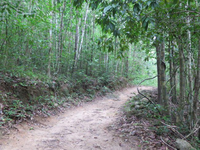 Dónde ir en Koh Phangan