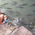 Kanchanaburi: Cascadas Erawan