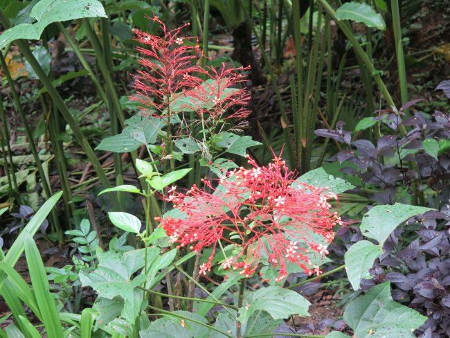 Flores de Laos