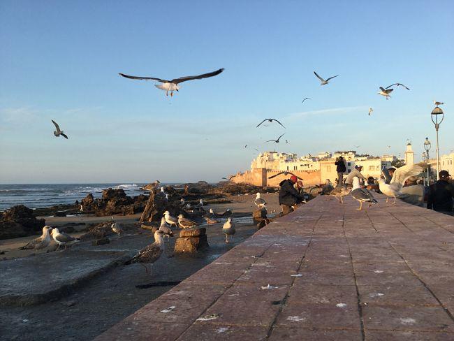 IMG_5739_opt ▷ Essaouira