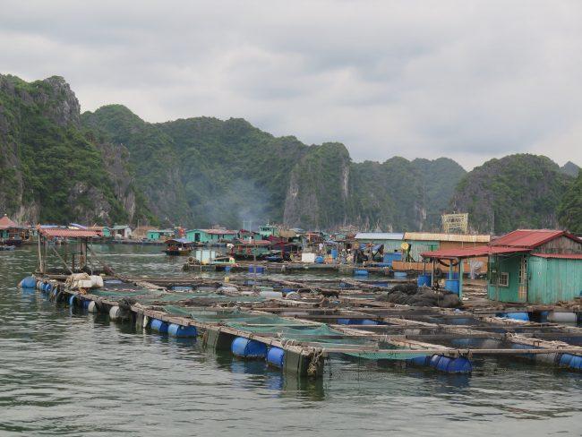 Visitar pueblos flotantes en Halong Bay