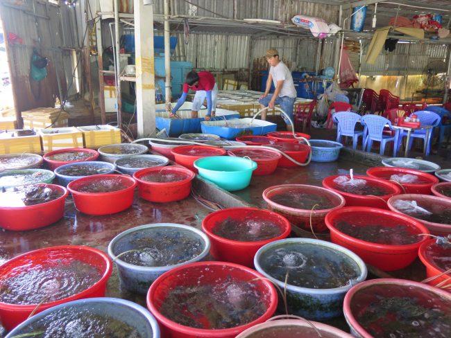 Restaurantes de pescado en Da Nang