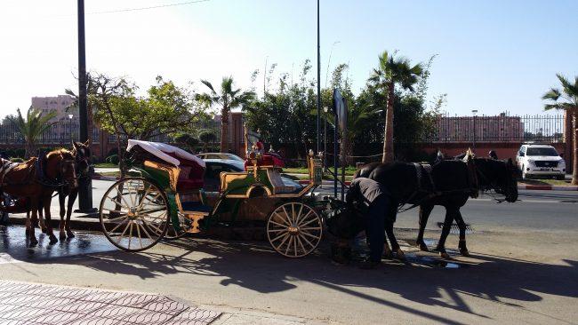 Precio paseo en calesa Marrakech
