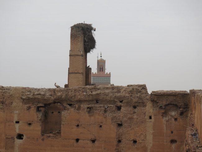 Cigüeñas sedentarias en Marruecos