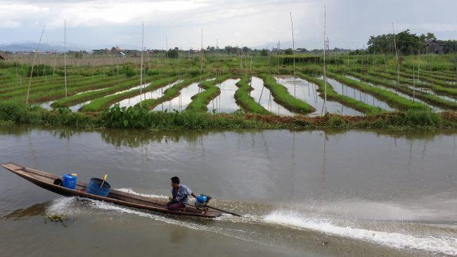 Cultivos sobre el agua
