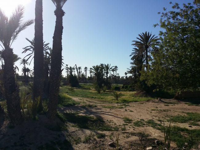 20180326_174723-min-e1558211957241 ▷ El Palmeral de Marrakech