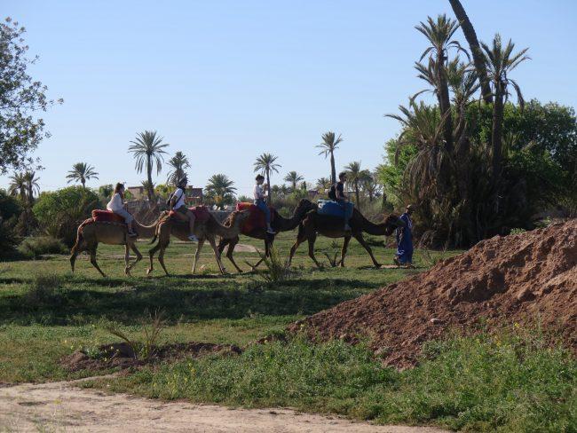 Ubicación del Palmeral de Marrakech