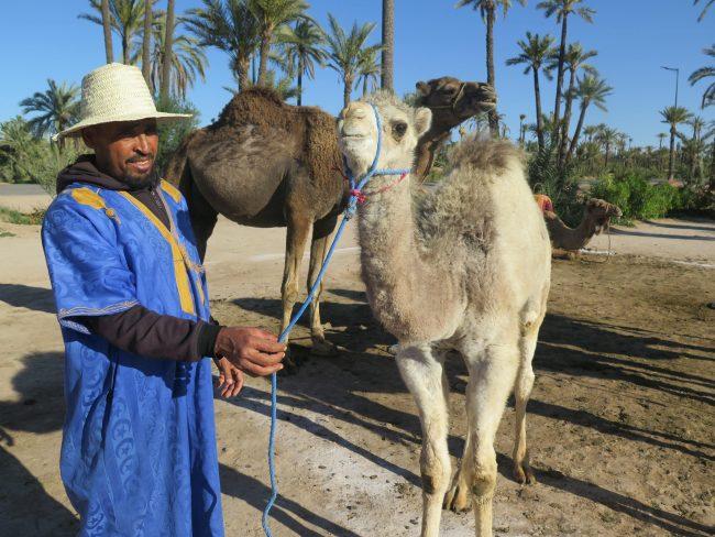 Paisajes del Palmeral de Marrakech