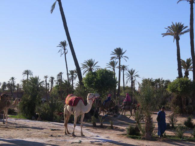 IMG_3080-min-e1558212469665 ▷ El Palmeral de Marrakech