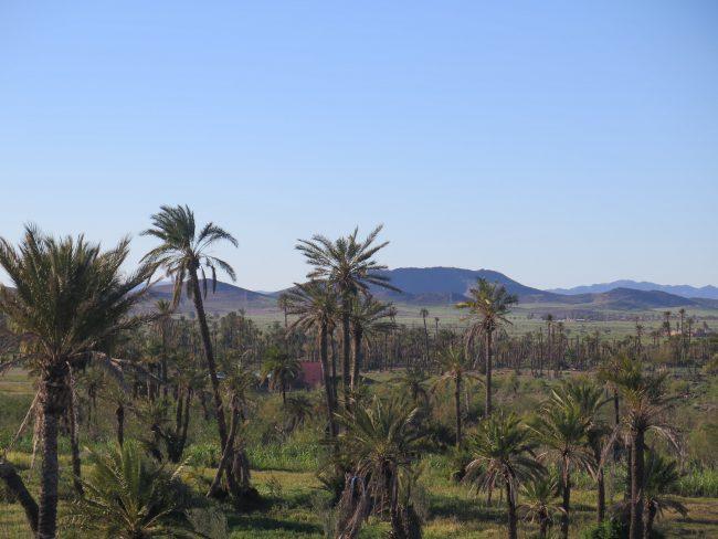 Historia del Palmeral de Marrakech