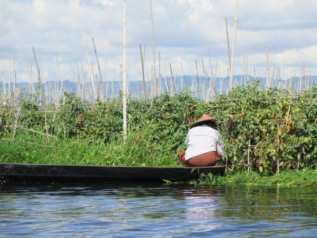 Hortelana de Inle trabaja sobre su barca