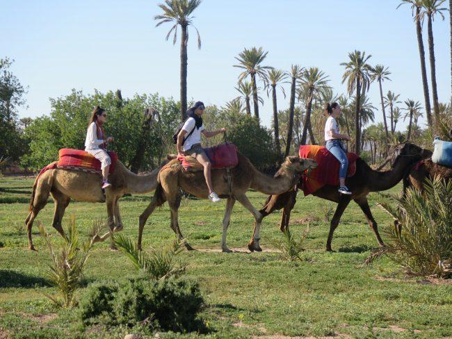 Las actividades más divertidas que hacer en Marrakech