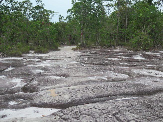 Todos los ecosistemas de Borneos en un solo Parque Natural