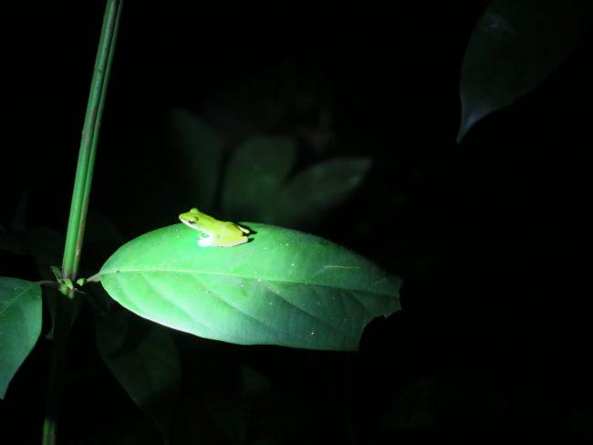 Excursión nocturna Parque Nacional de Bako