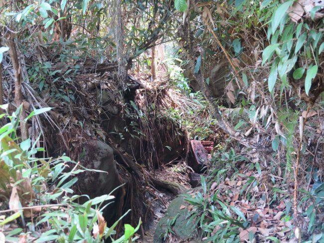 Trekking en la selva de Borneo