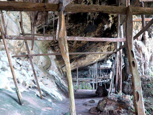 Recolección de nidos de pájaro en las Cuevas de Niah