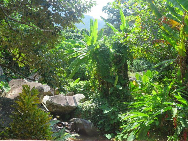 Vegetación de la Isla de Tioman