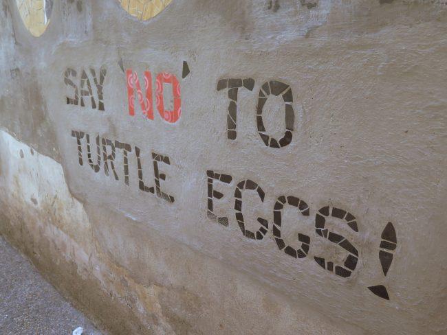 ¡No comas huevos de tortuga!