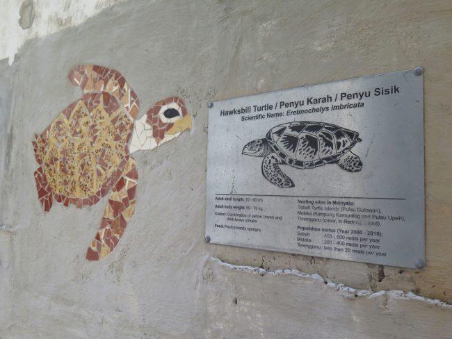 Tortugas en la Costa Este de Malasia