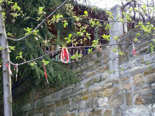¿Por qué los búlgaros cuelgan pulseras rojas de los árboles?