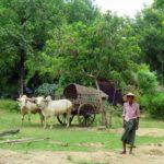 Las cinco curiosidades más curiosas de Myanmar